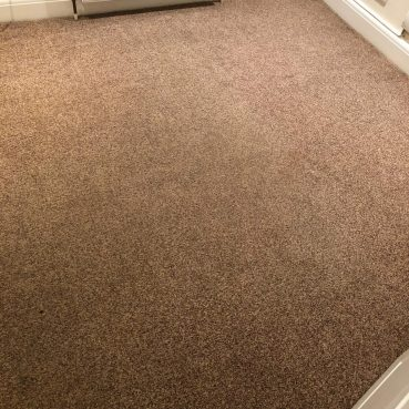 , Carpet after cleaning